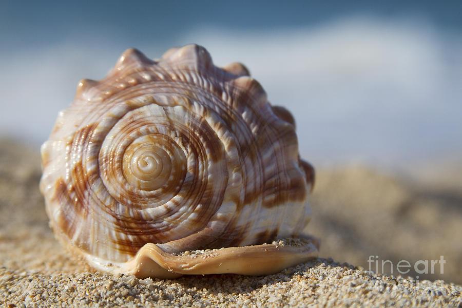 Seashell Photograph - Hawaii Gentle Breeze by Sharon Mau