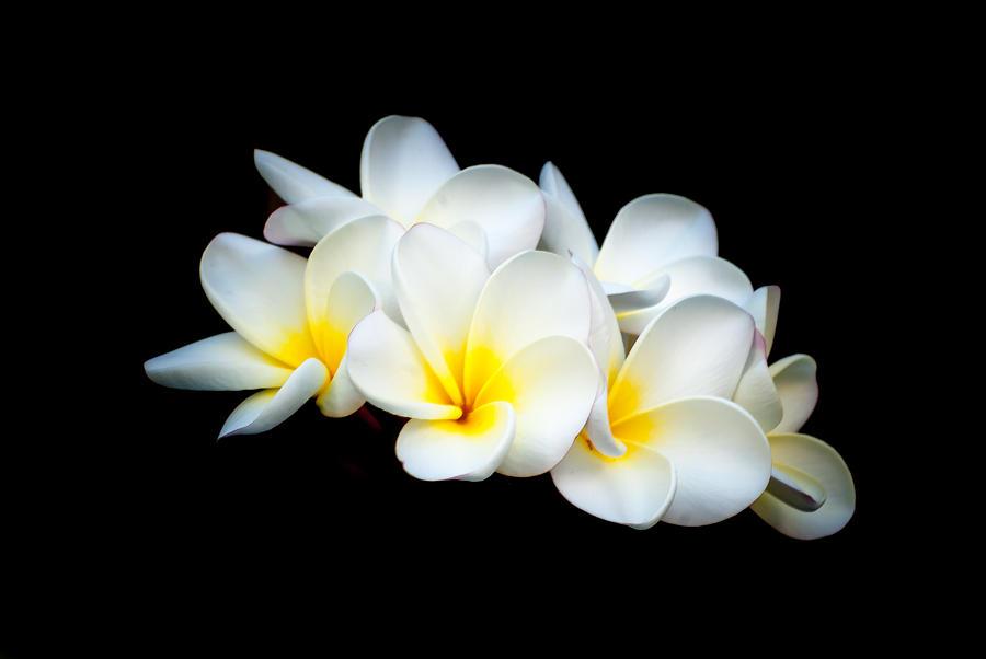 Flowers Photograph - Hawaiian Blooms by Paul Johnson