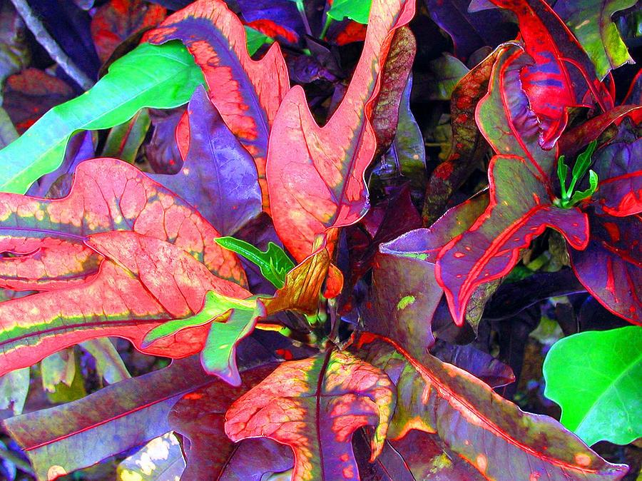 Leaves Photograph - Hawaiian Foliage by Jean Hall