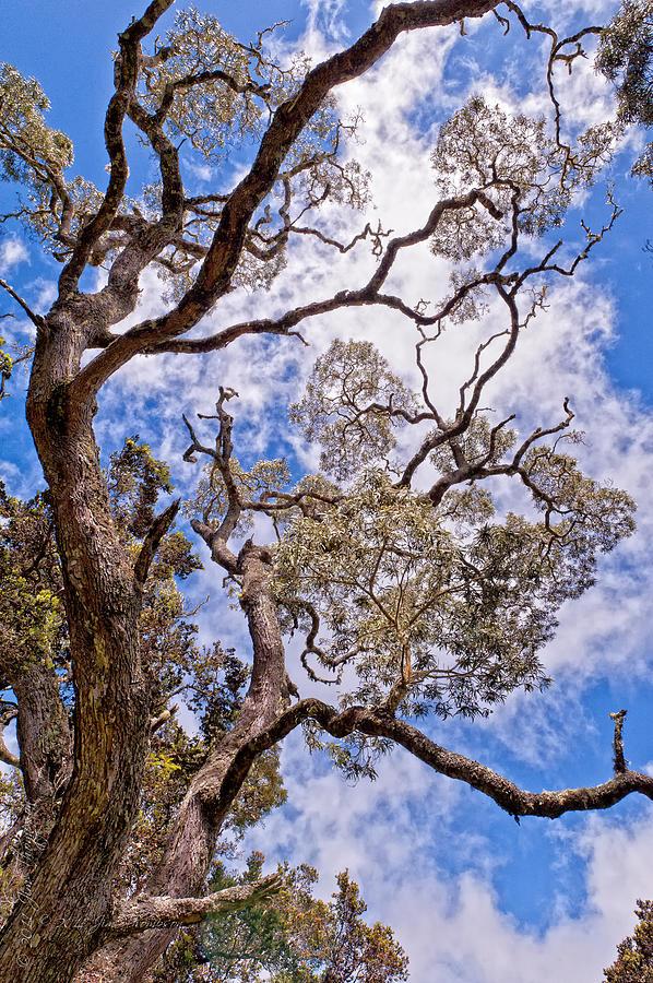 Clouds Photograph - Hawaiian Sky by Jim Thompson
