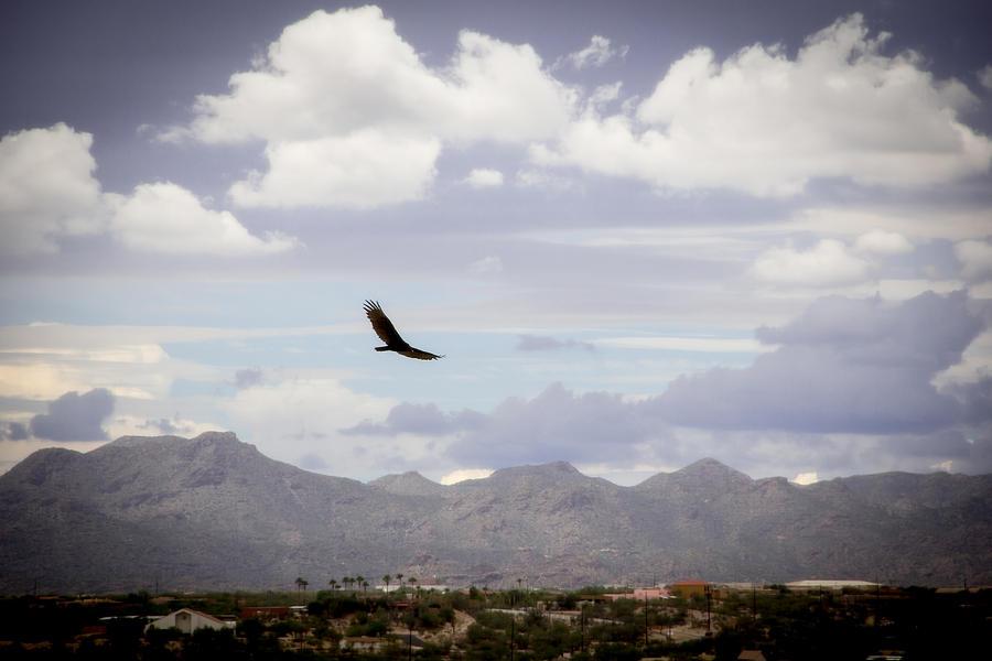 Hawk Photograph - Hawk - 2013-242 by Judi FitzPatrick