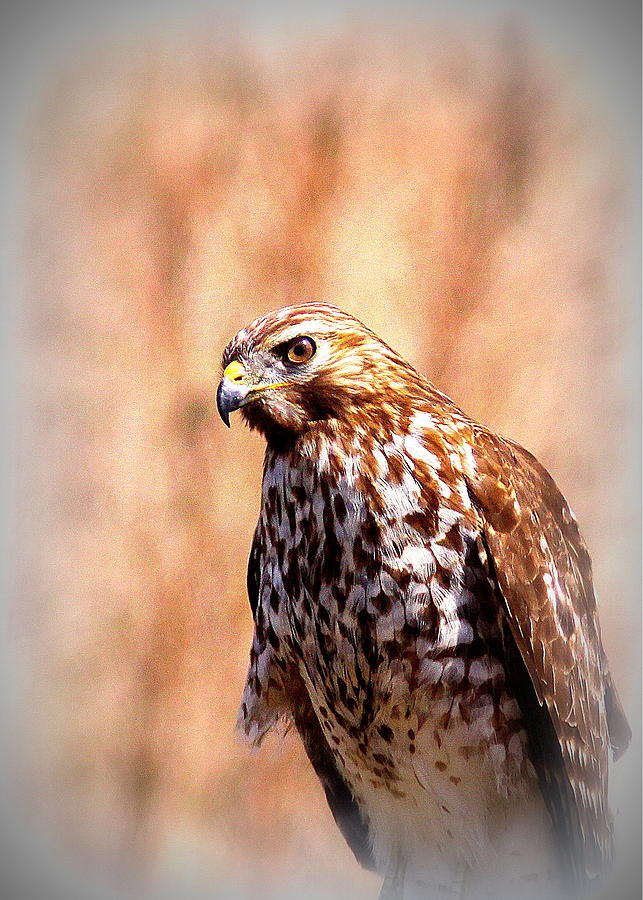 Hawk By The Lake Photograph