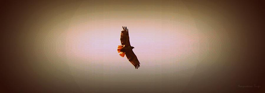 Flying Photograph - Hawk Eyes II by Augustina Trejo