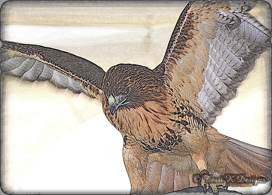 Red Tail Hawk Photograph - Hawk Sketch by Terri K Designs