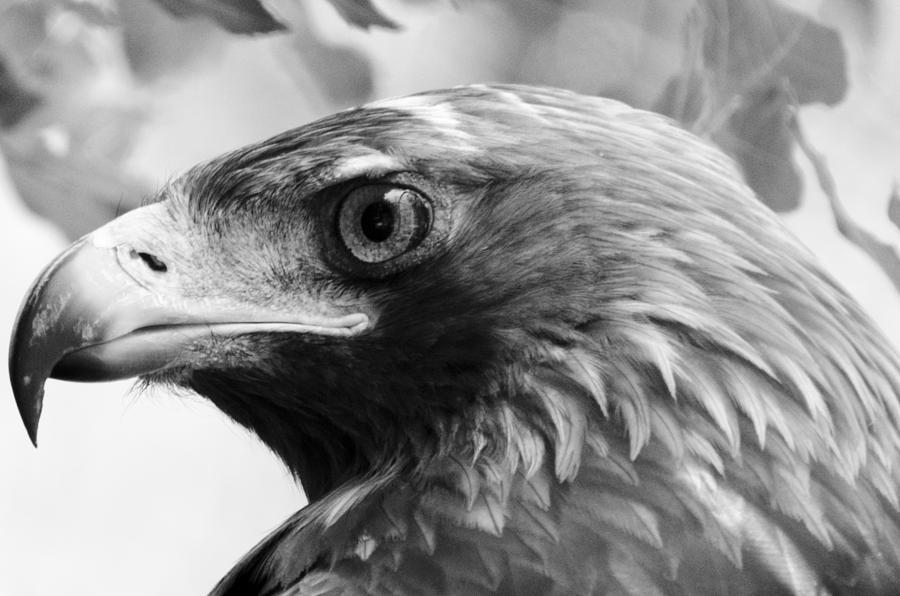 Hawk Photograph - Hawkeye by Sotiris Filippou