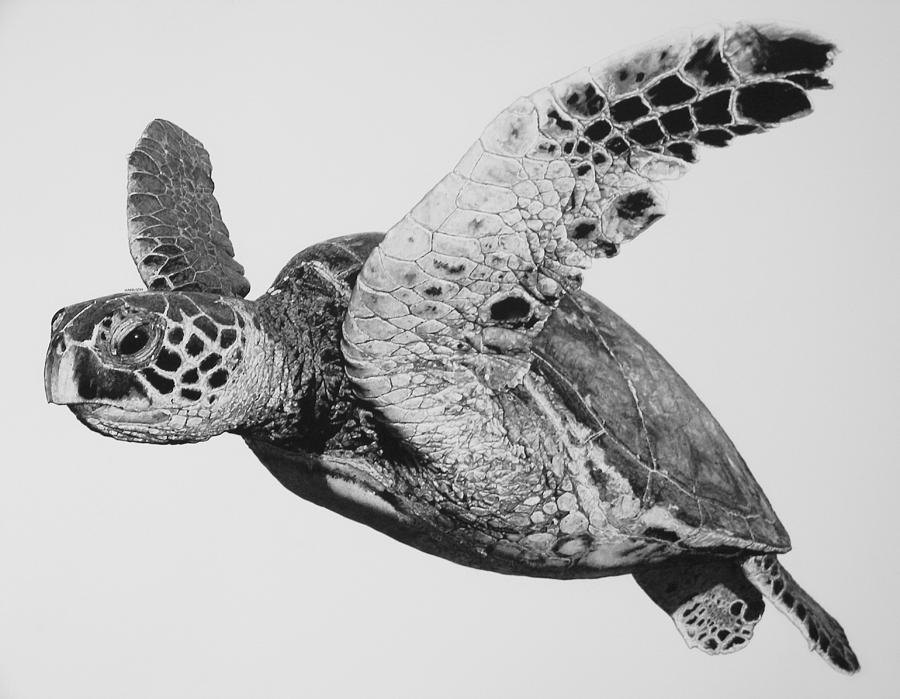 Pro Design Patterns Turtle