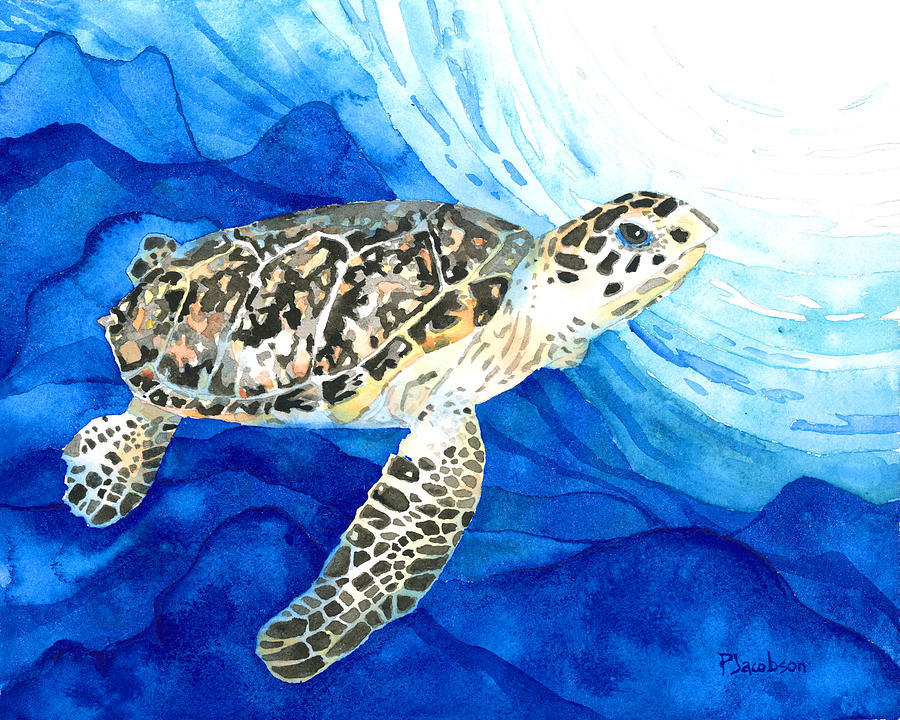 Turtle Painting - Hawksbill Sea Turtle 2 by Pauline Walsh Jacobson