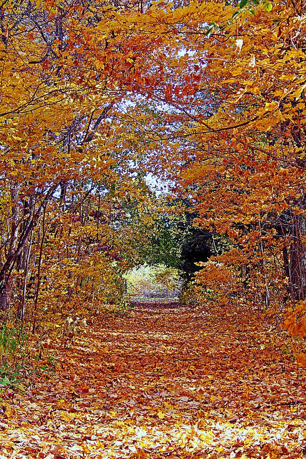 Hawthorn Hollow Photograph - Hawthorn Hollow by Kay Novy