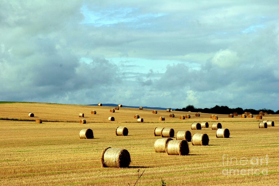 Hay Photograph - Hay by Arie Arik Chen