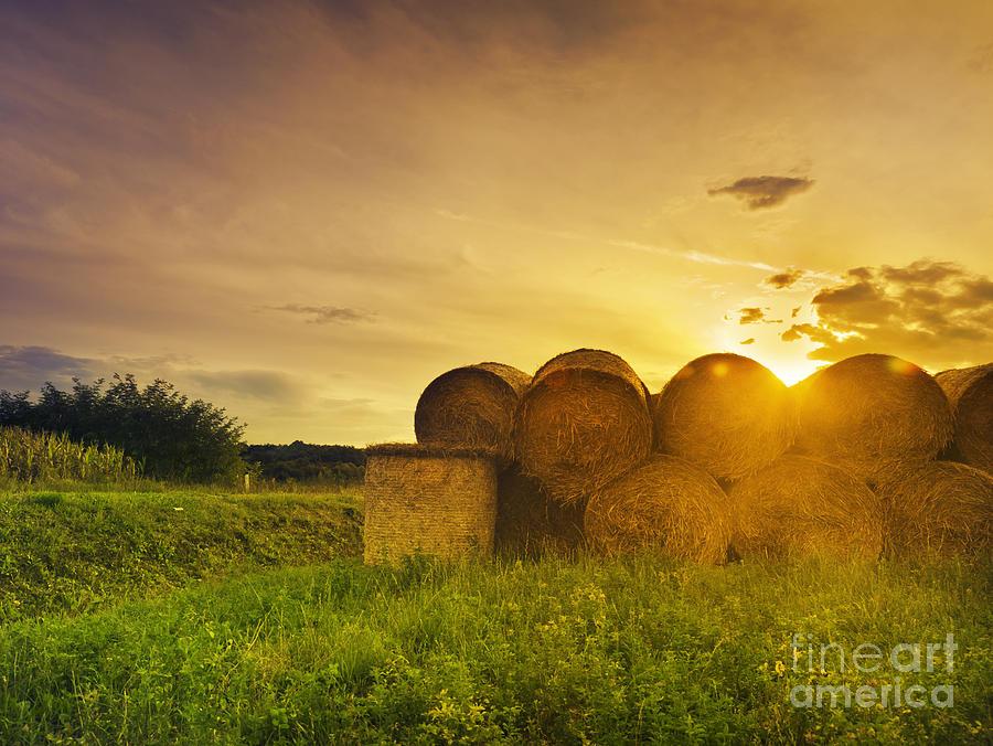 Hay Pyrography - Hay Bales by Jelena Jovanovic