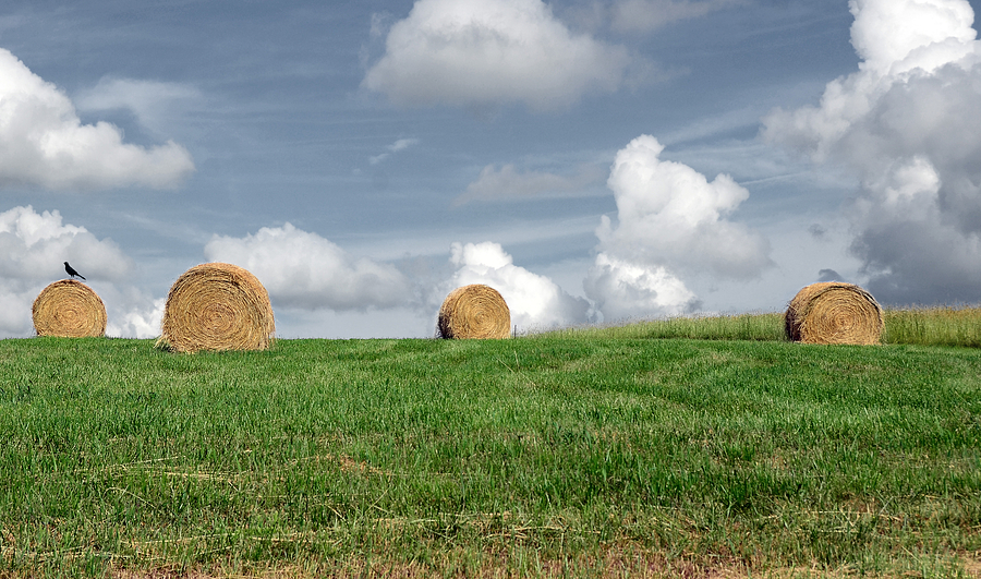 Countryside Photograph - Hay Bales by Steven Michael