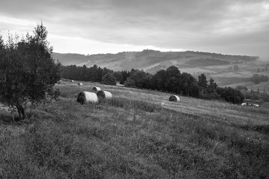 Hay Rolls In The Fields Landscape In Italy