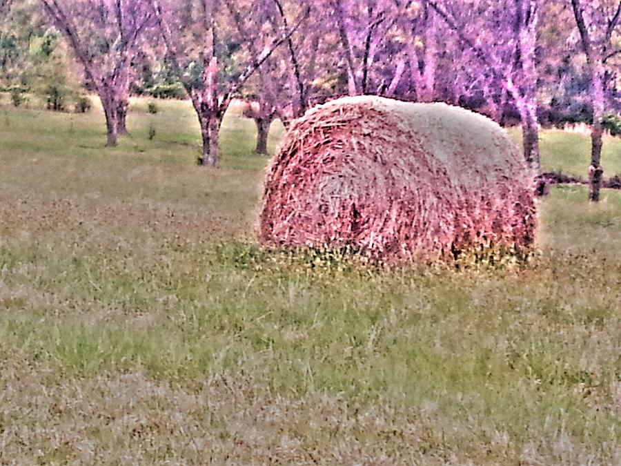 Farm Photograph - Hay Stack by Sarah E Kohara