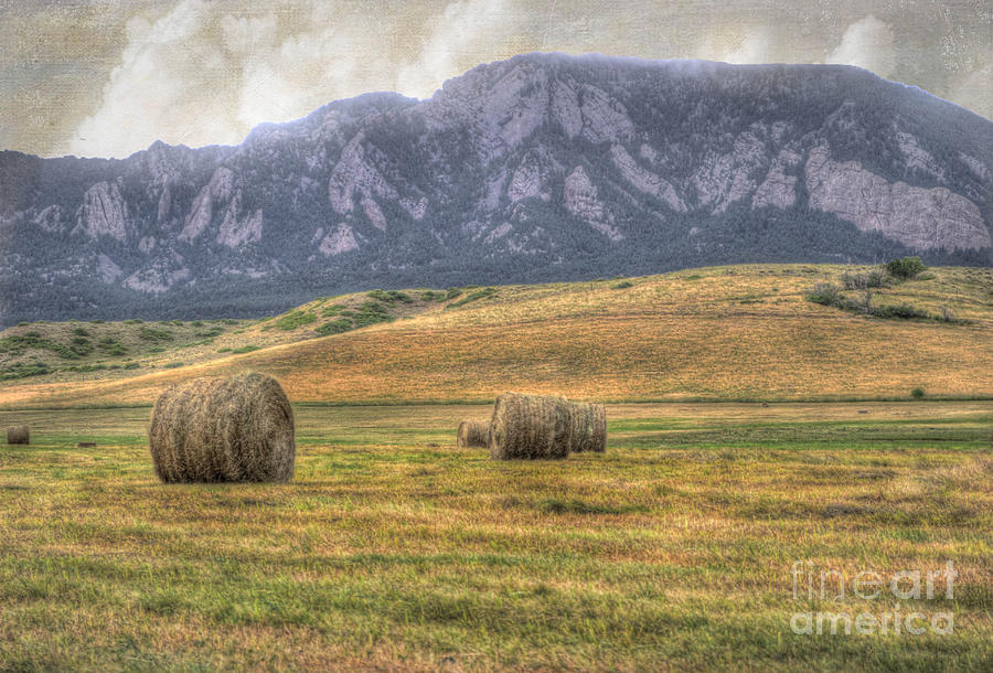 Agriculture Photograph - Hay There by Juli Scalzi