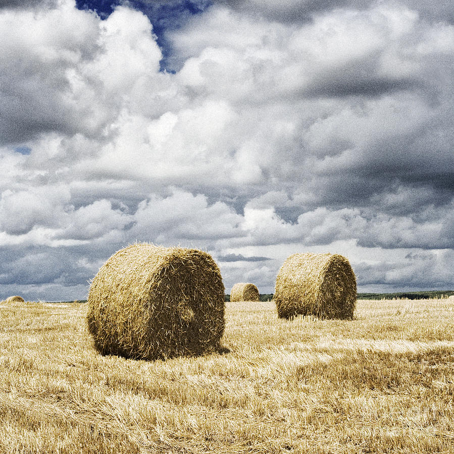 Hay Bales Photograph - Haybales In A Field In England Uk by Jon Boyes
