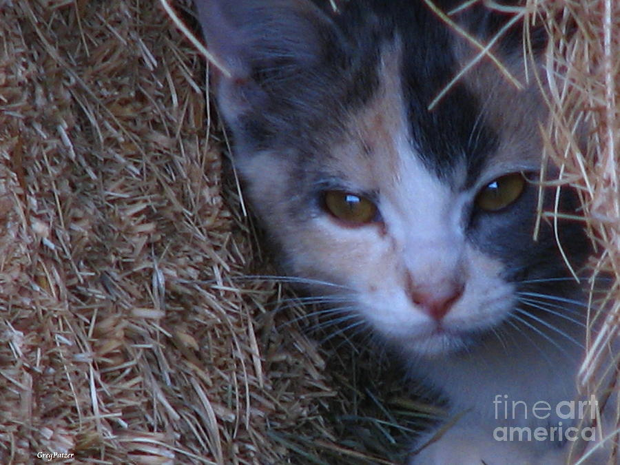 Hay Photograph - Haystack Cat by Greg Patzer