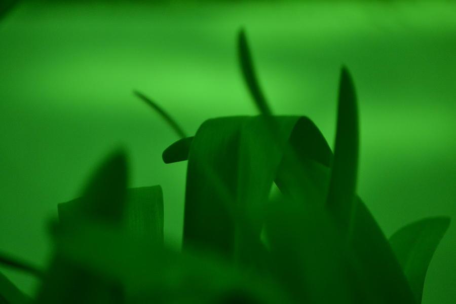 Grass Photograph - Haze Of Green by Kiros Berhane