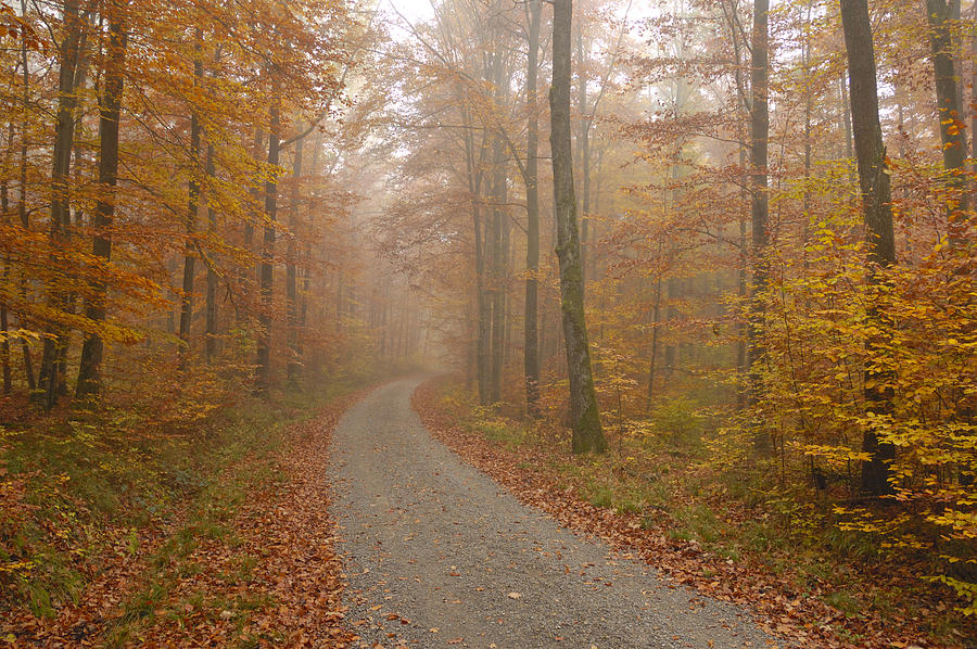 Fall Photograph - Hazy Forest In Autumn by Matthias Hauser