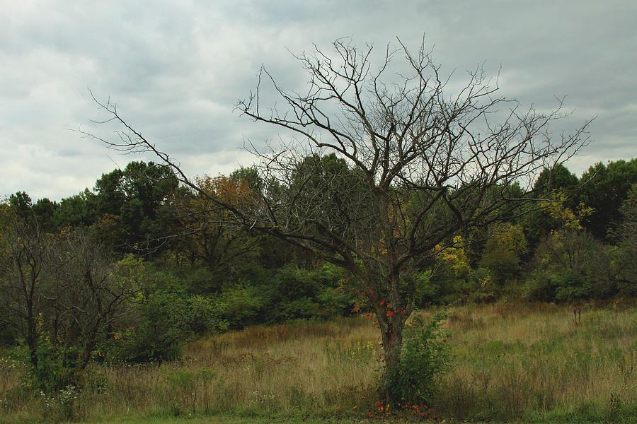 Carla Pivonski Photograph - Hazy Forest No.3 by Carla Pivonski