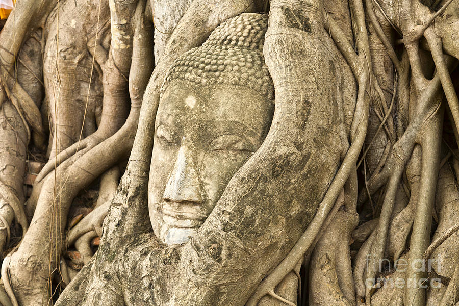 Ancient Photograph - Head Of Buddha Ayutthaya Thailand by Colin and Linda McKie