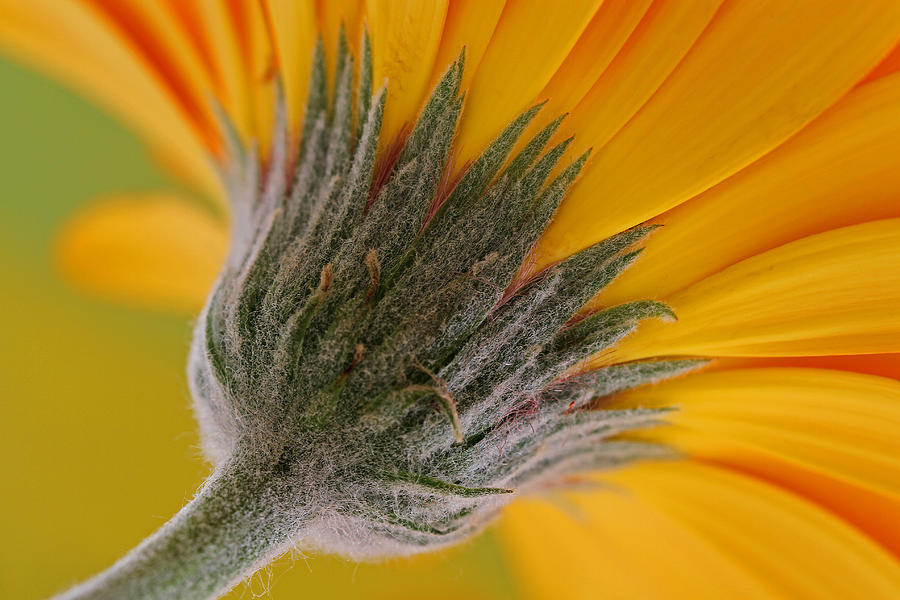 Flower Photograph - Heads Up by Juergen Roth