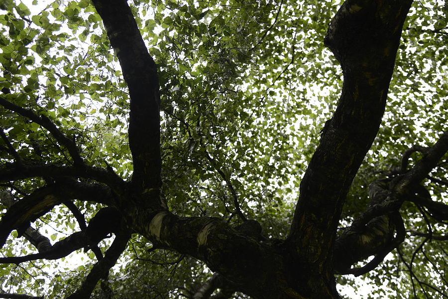 Fine Photograph - Healing Power Of Nature 6 by Teo SITCHET-KANDA