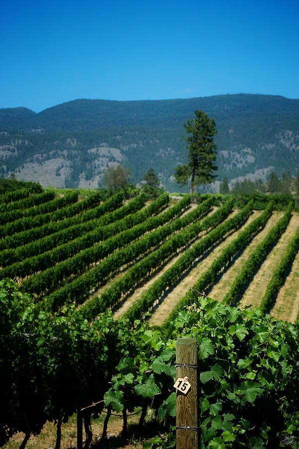 Vineyard Photograph - Heard It Through The Grapevine by Lisa Knechtel