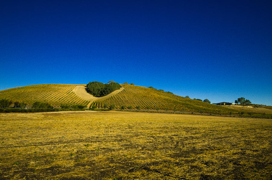Agriculture Photograph - Heart Hill 3 by Connie Cooper-Edwards