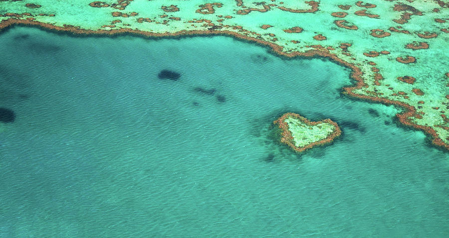 Heart Reef Photograph by Kokkai Ng