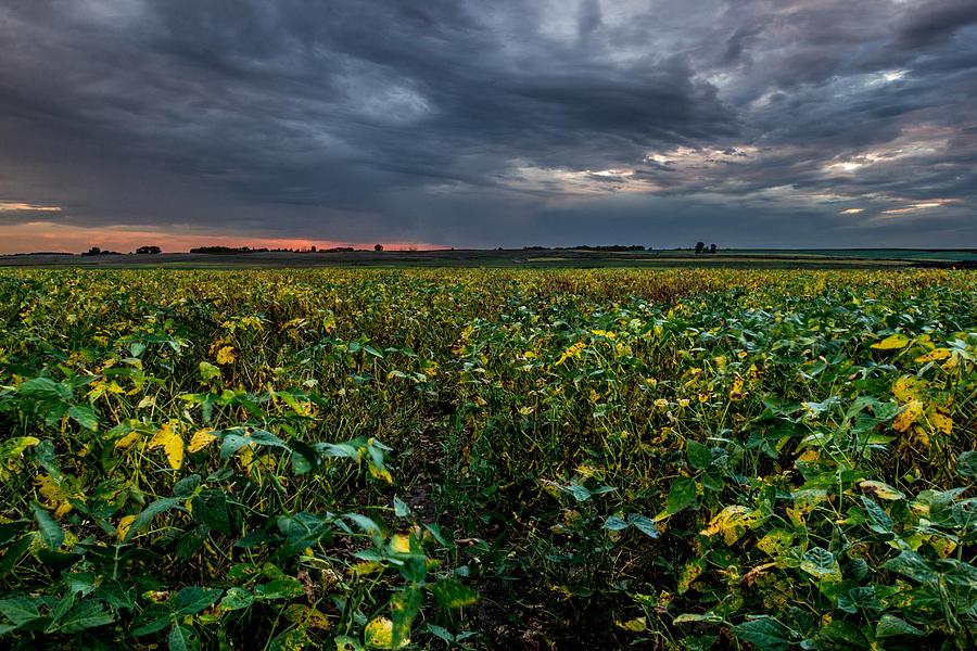 Soybean Photograph - Heartland Sunset by Aaron J Groen