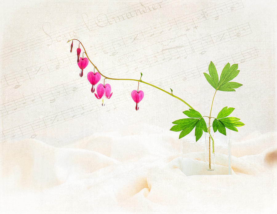 Bleeding Heart Photograph - Hearts And Music by Sarah-fiona  Helme
