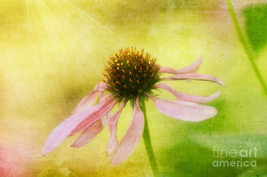 Floral Photograph - Hearts Desire by Lois Bryan