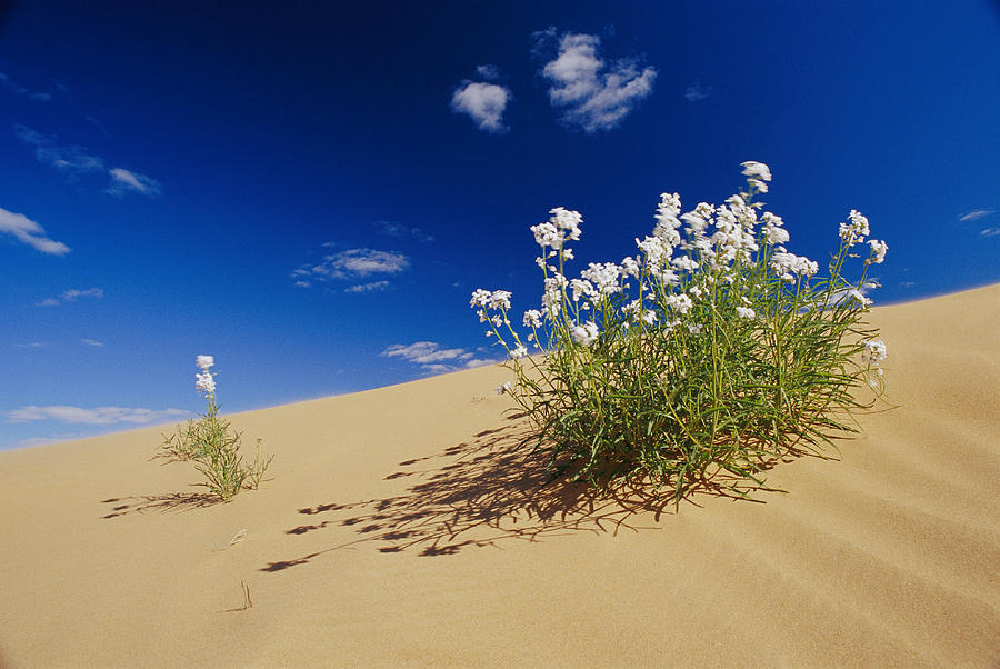 Australia Photograph - Hearty Wild Stock Wildflowers Growing by Jason Edwards