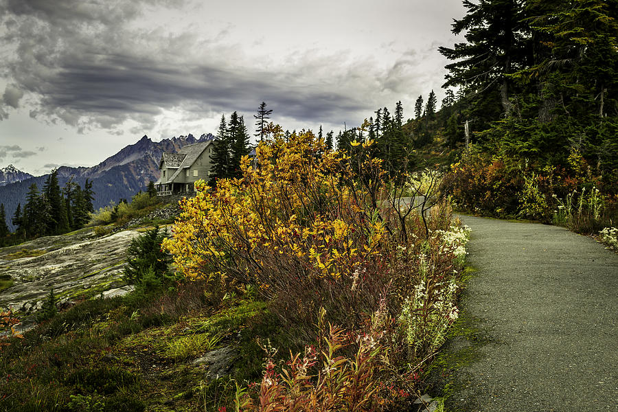 Artist Point Photograph - Heather Meadow by Blanca Braun