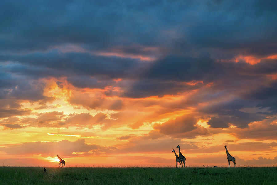 Africa Photograph - Heaven And Earth by John Fan