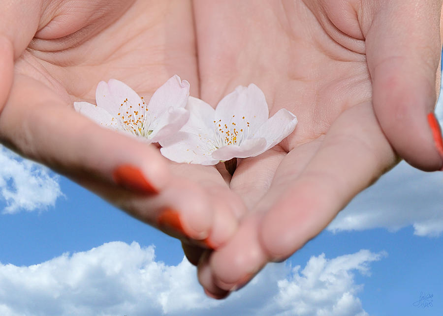Granville Island Photograph - Heavenly Blossoms by Lisa Knechtel