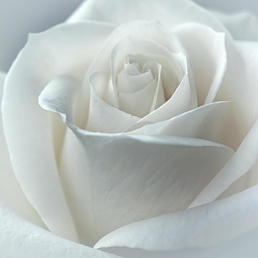 Floral Photograph - Heavenly by Darlene Kwiatkowski