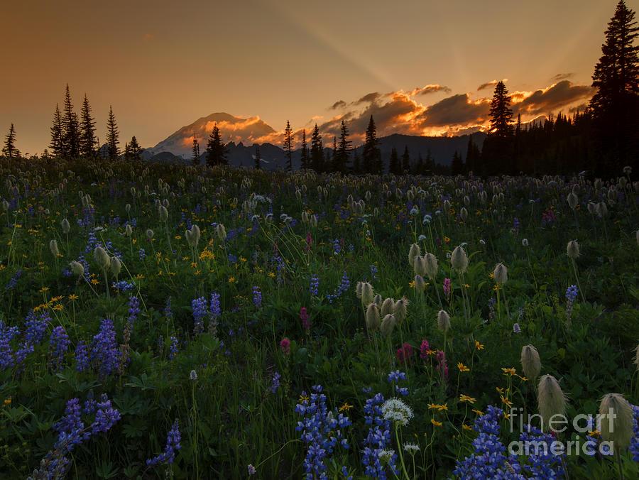 Sunbeams Photograph - Heavenly Garden by Mike  Dawson