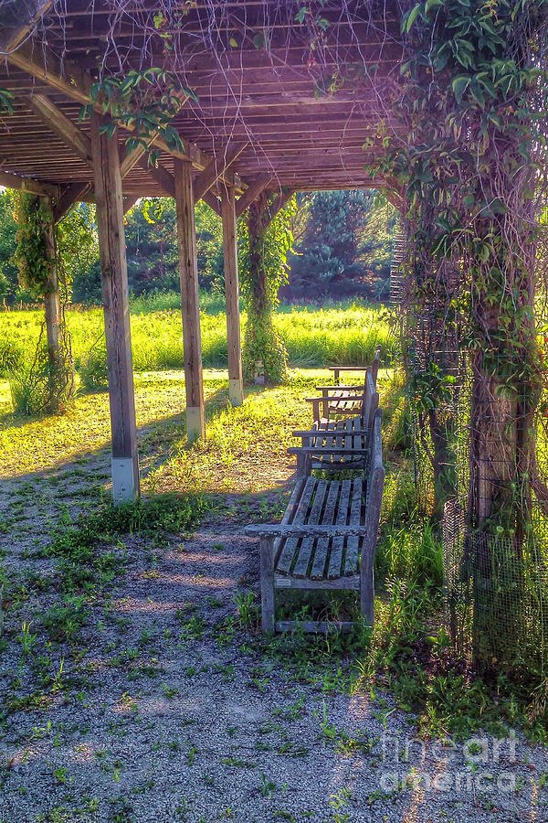 Heavenly Grape Arbor Photograph