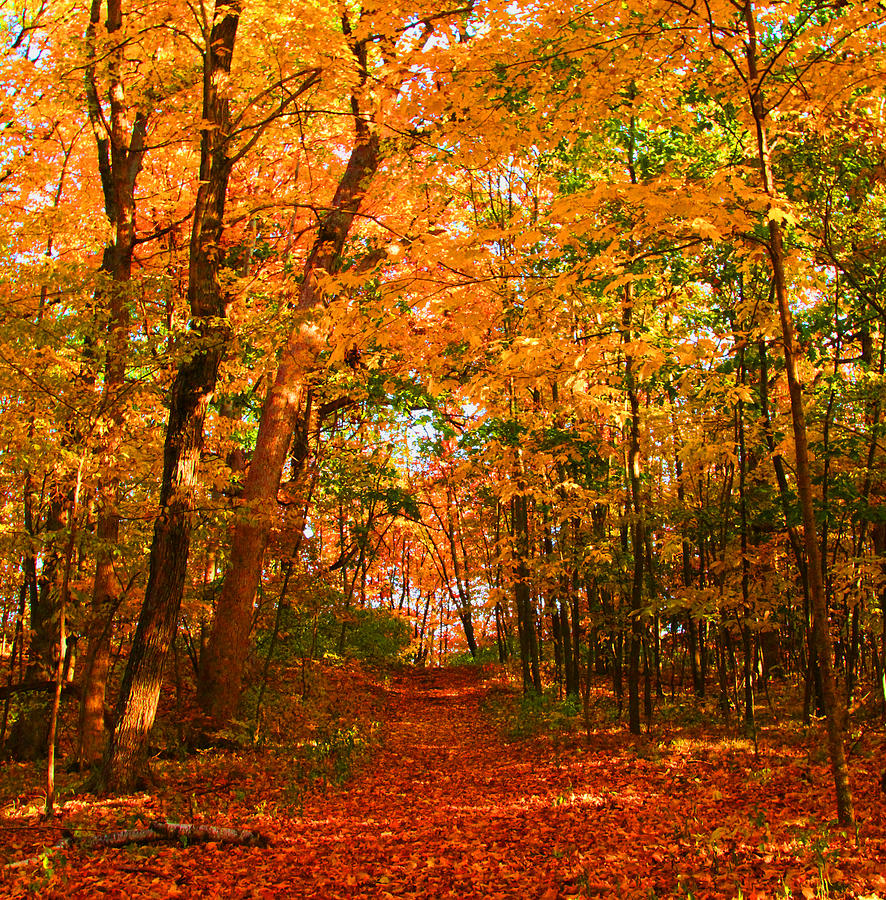 Fall Photograph - Heavenly Pathway by James Hammen