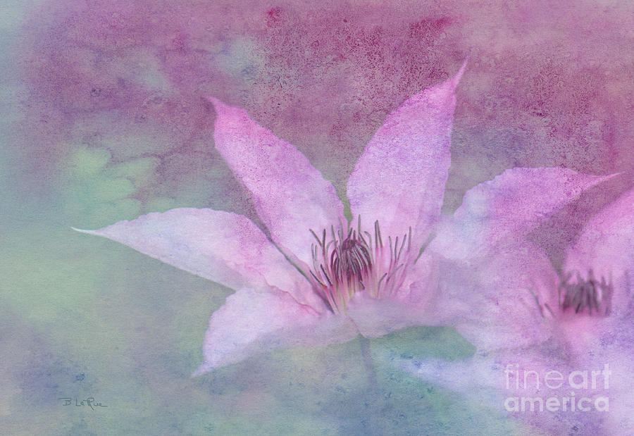 Clematis Photograph - Heavenly Petals by Betty LaRue