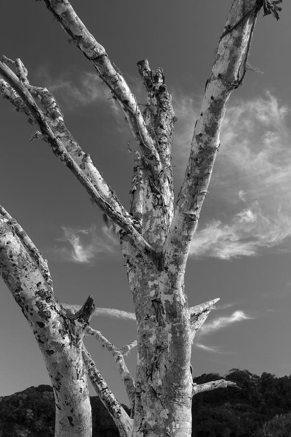 Heavenly Tree Photograph