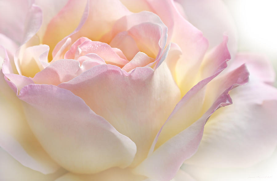 Rose Photograph - Heavens Pink Rose Flower by Jennie Marie Schell