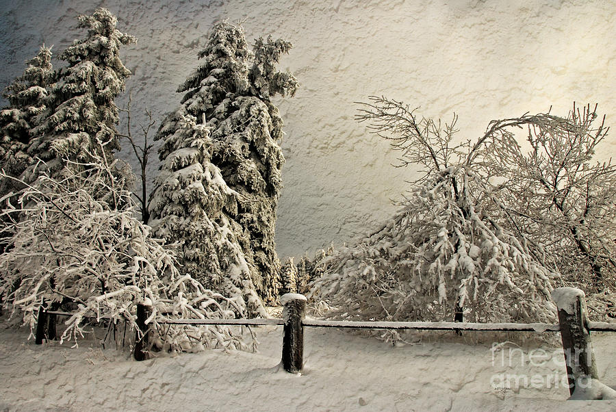 White Christmas Photograph - Heavy Laden Blizzard by Lois Bryan