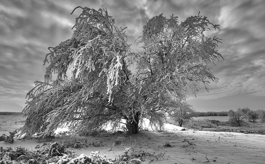 Heavy Winter Photograph by Murat Kuzhakhmetov