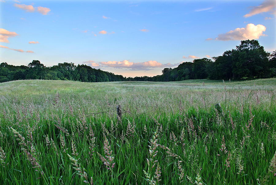Field Photograph - Hebron Field by Andrea Galiffi