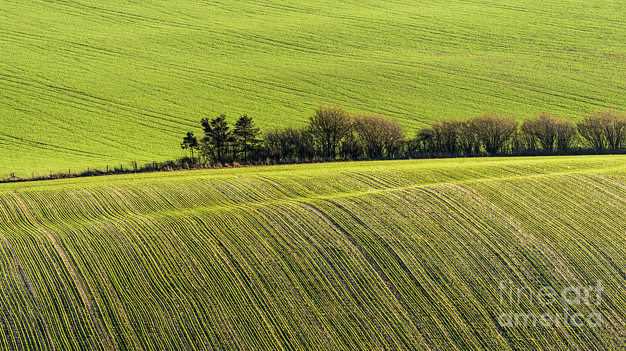 South Downs Photograph - Hedgerow Conga by Richard Thomas