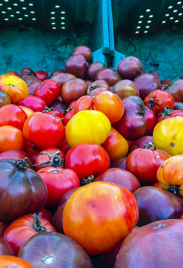 Tomatoes Photograph - Heirloom Tomatoes V. 2.0 by Dennis Reagan
