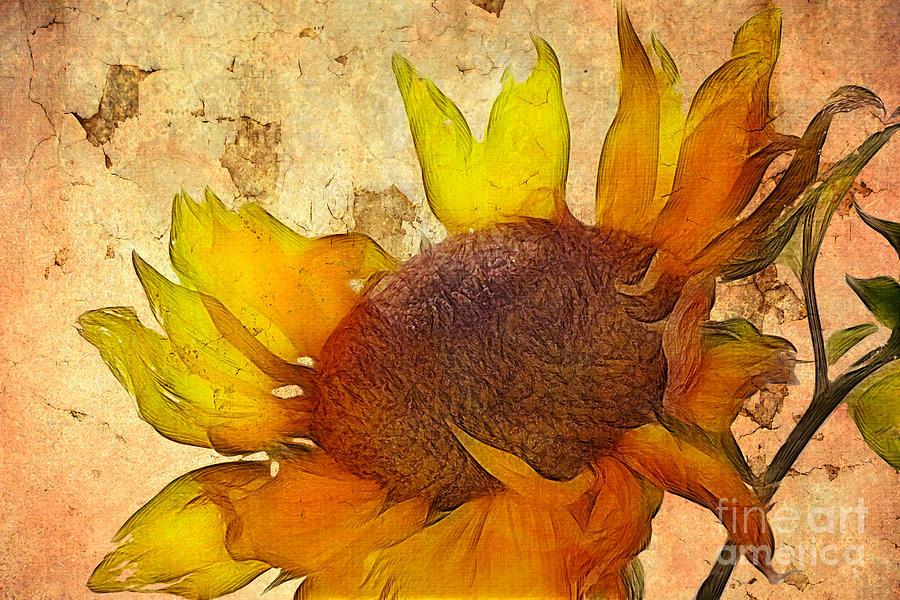 Helianthus Digital Art