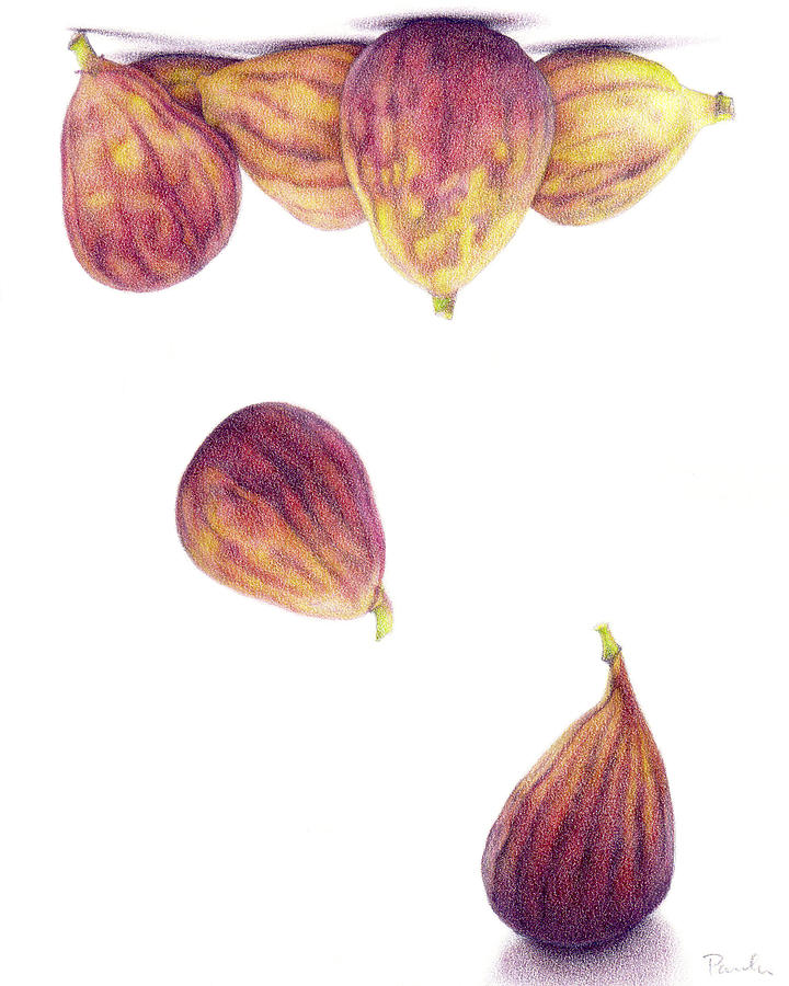 Fig Drawing - Helium Figs by Paula Pertile